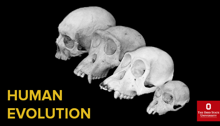 Human Evolution - yellow text